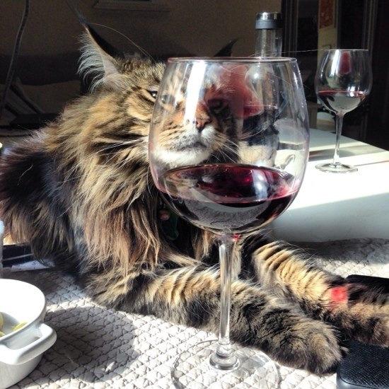 Кот с вином картинка