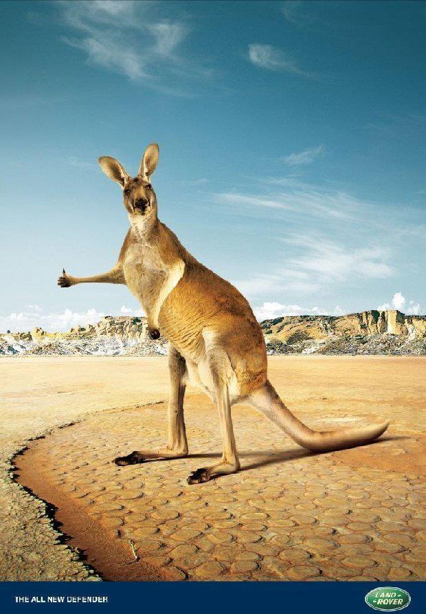 картинка реклама австралии среднерослое