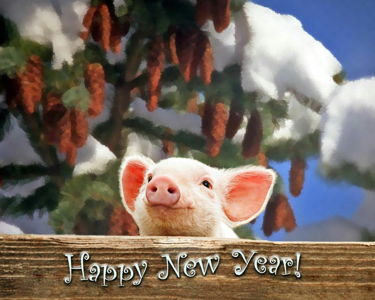Поздравления, гифки с новым годом свиньи