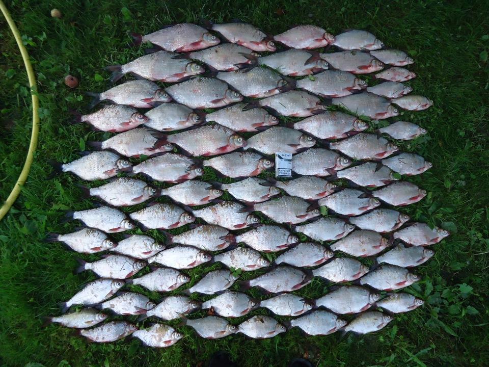 ока лукьяново рыбалка