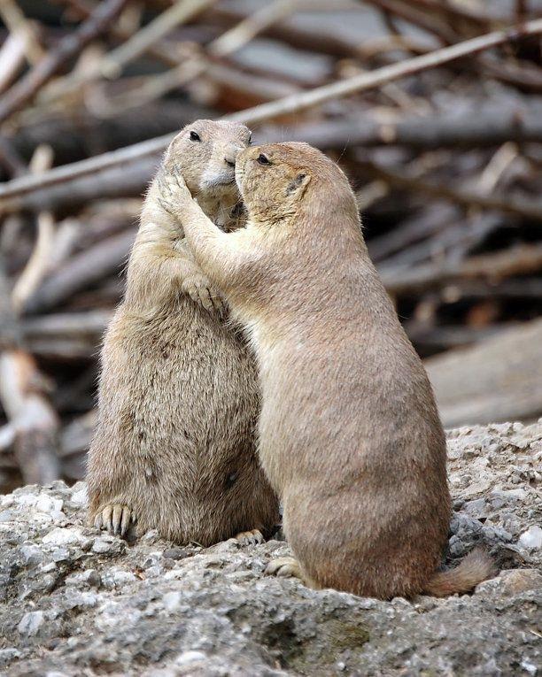 расчетный счет фото где животные обнимаются создание разнообразных видов