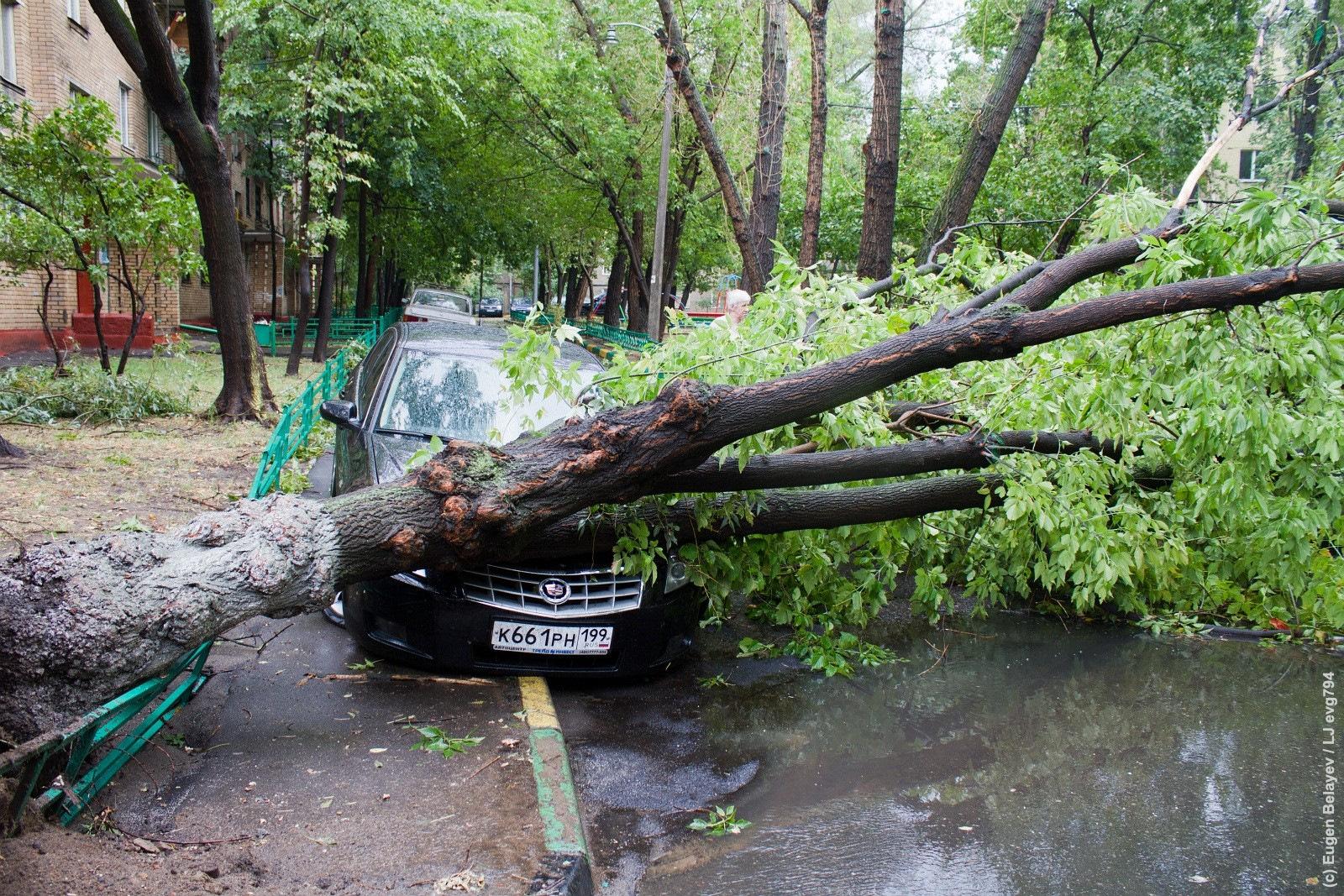 качественные фотообои ураган в дмитровском районе фото изучению представлены четыре