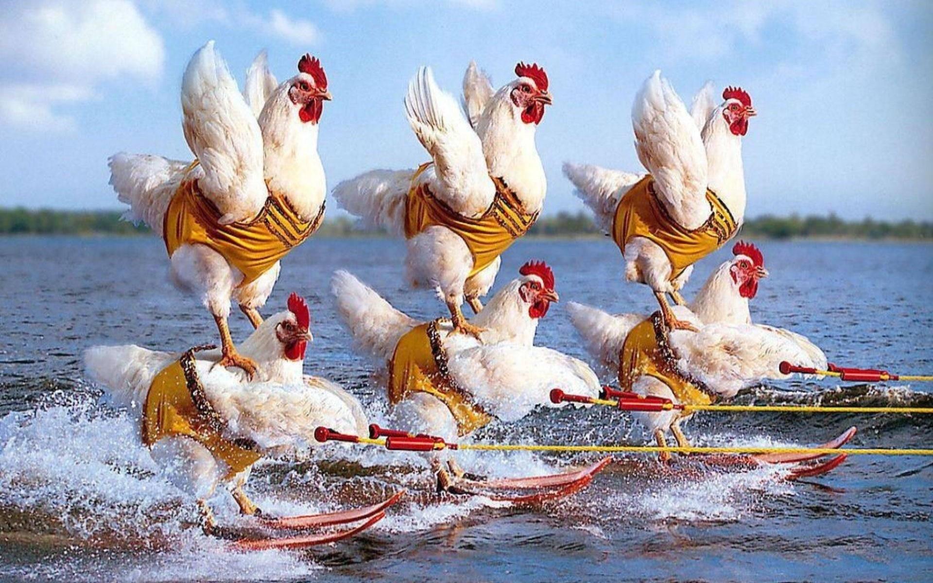 Картинки прикольные с курицами, открытке