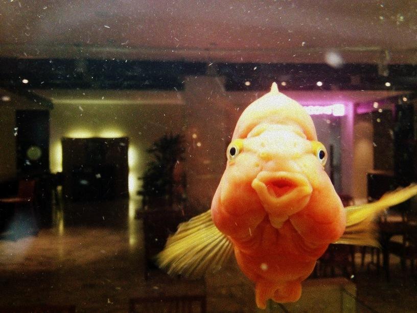 фото рыб смешных