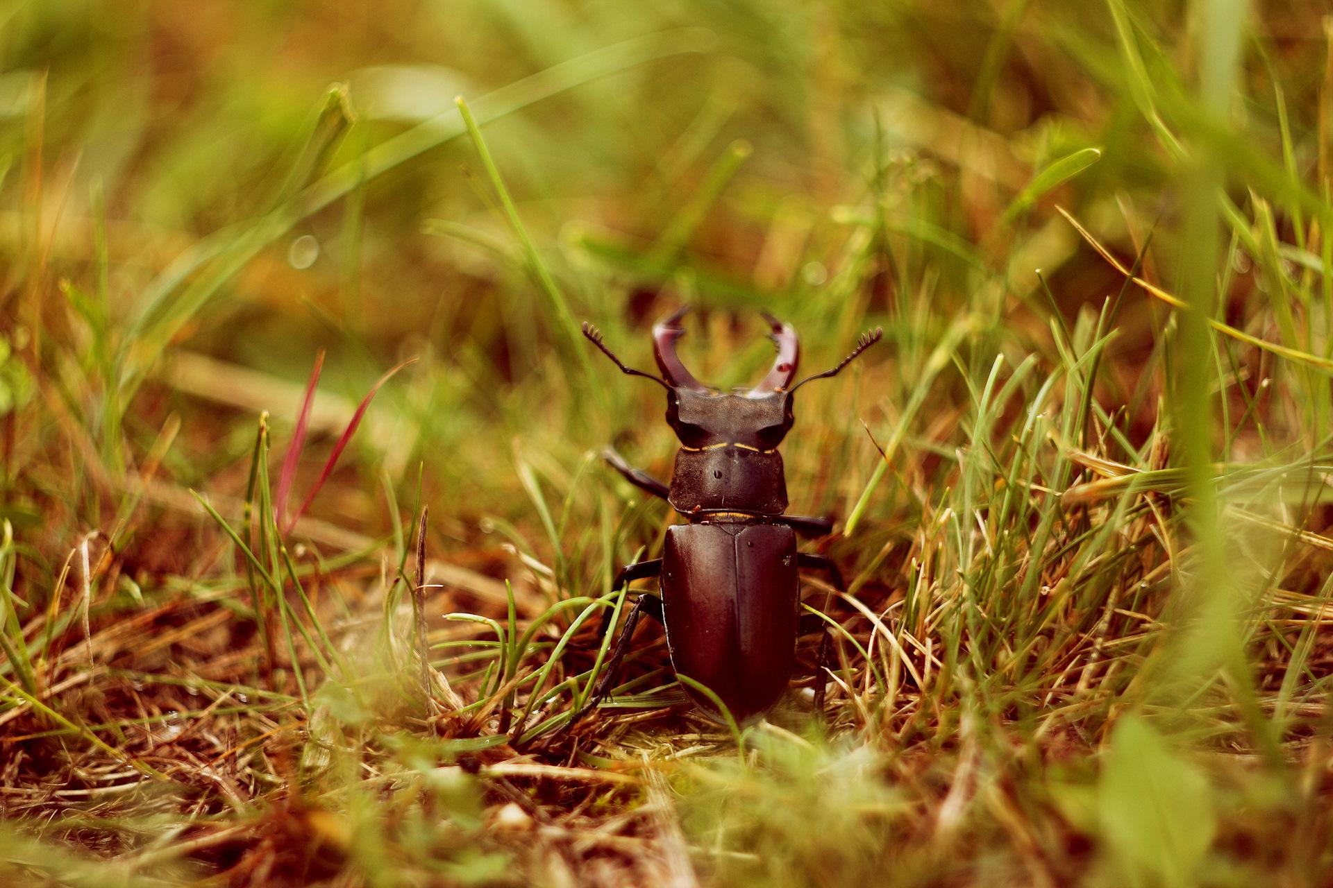 Два жука картинки
