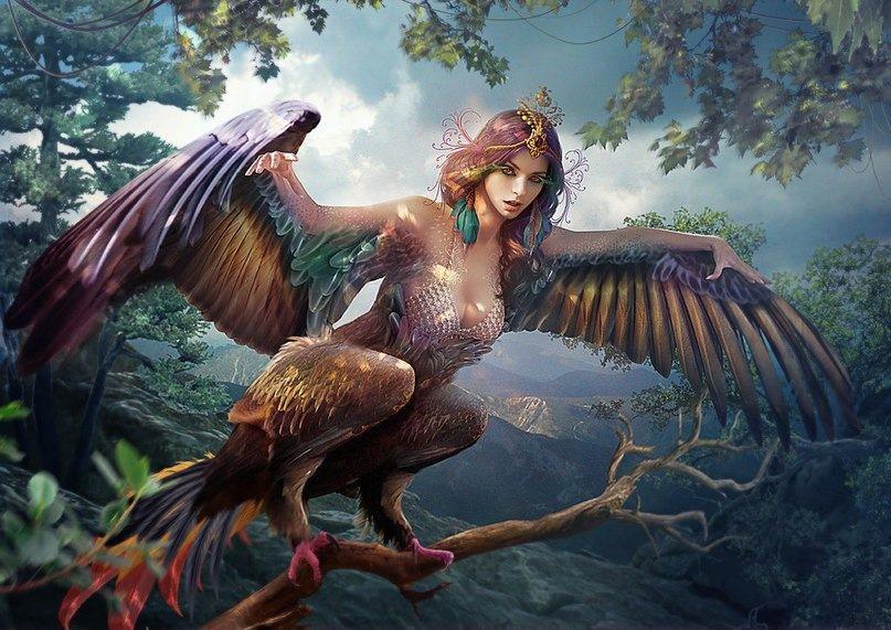 the serins half bird women of greek