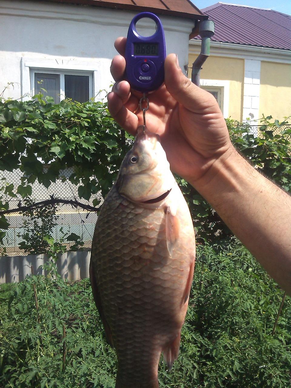 рыбалка на воронежском водохранилище картинки каждое вашей жизни