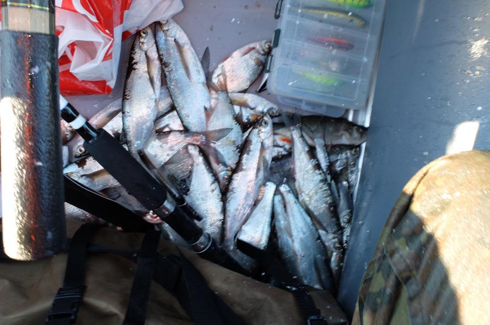 Рыбалка | Вологодская область