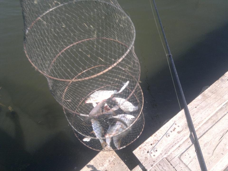 Ловля рыбы на искусственного мотыля