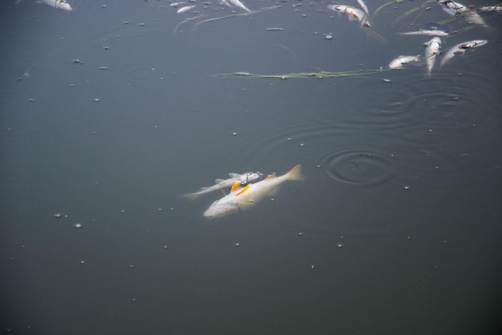 Рыбалка на протве в боровском районе