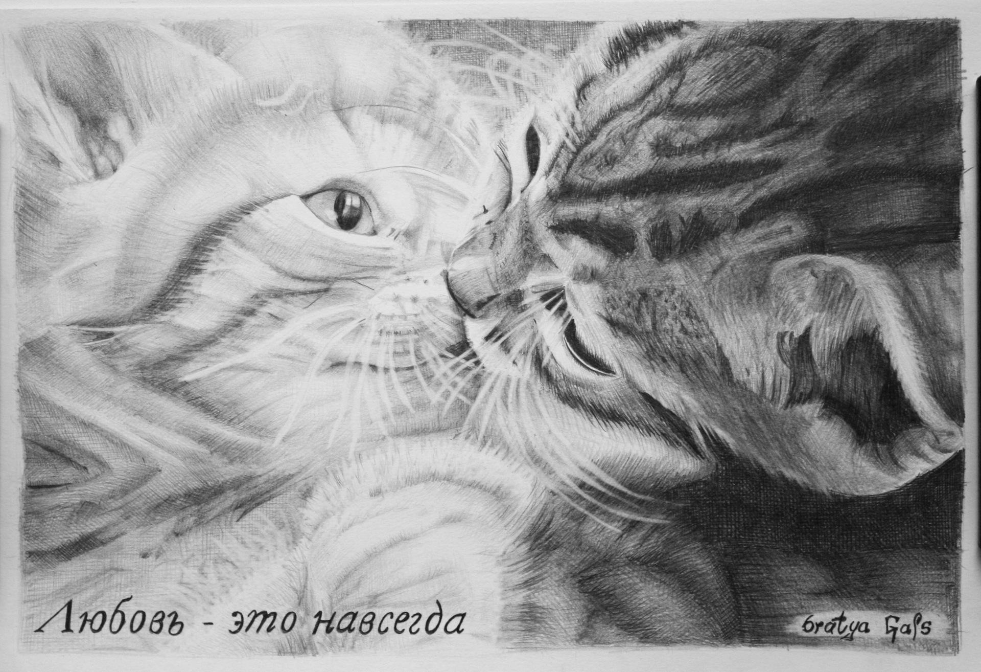Дню, влюбленные котики картинки нарисованные карандашом