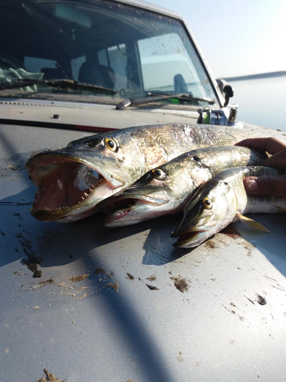 летняя рыбалка в заполярье полная чушь самом