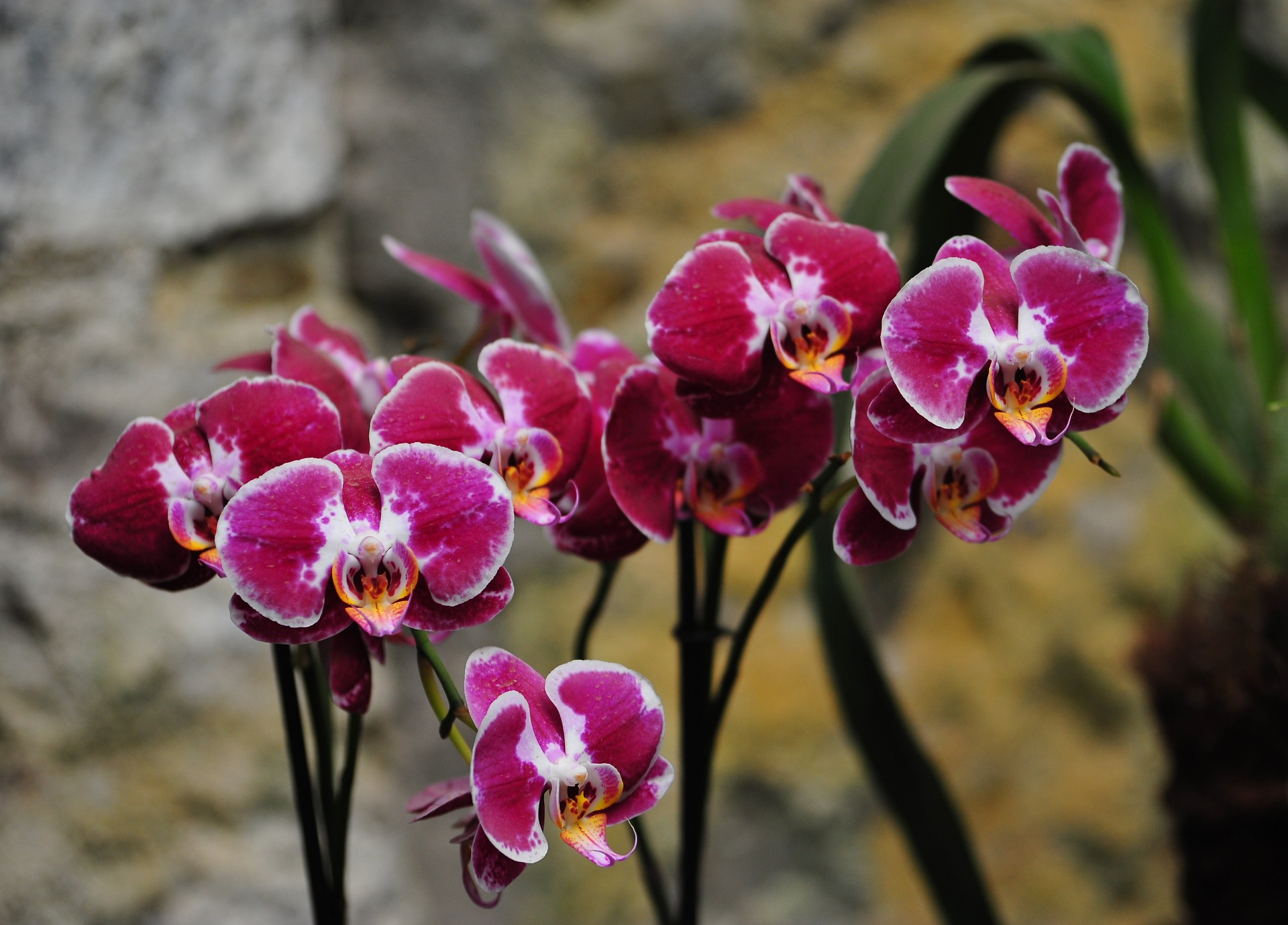 картинки орхидей на ножке данном разделе сайта