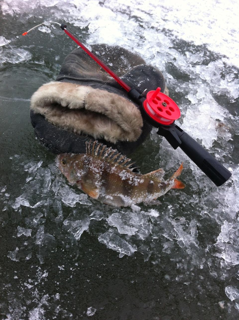 на что сейчас клюет рыба