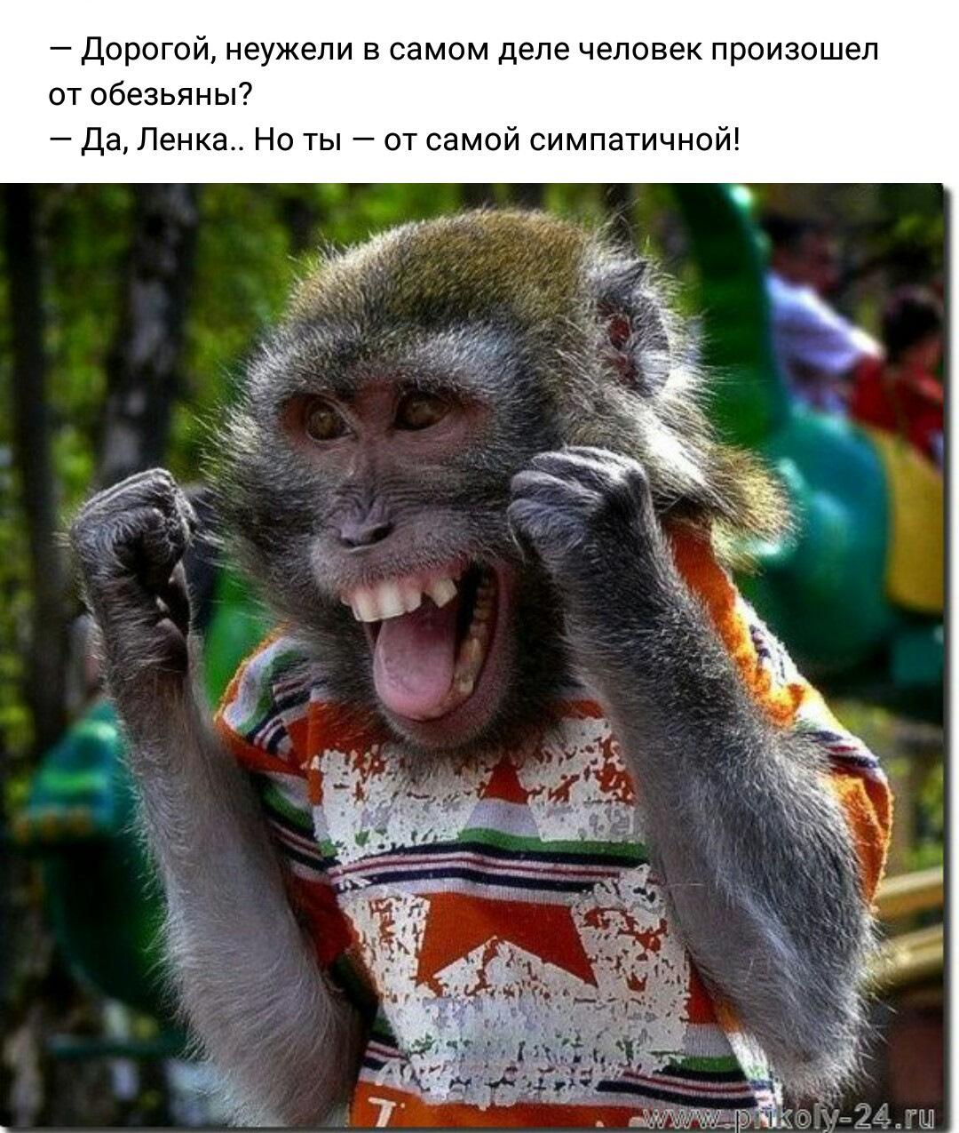 Картинки с обезьянками и надписями