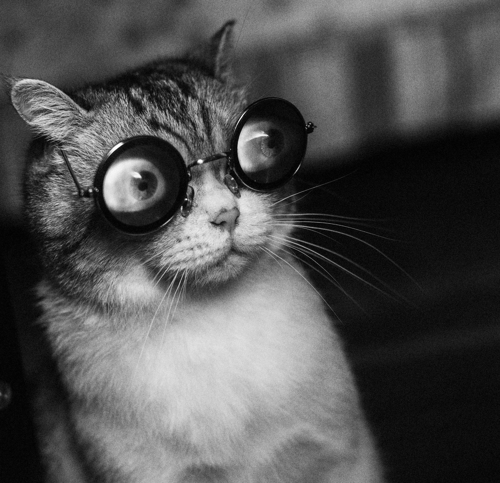 Картинки на аву с смешные кошки