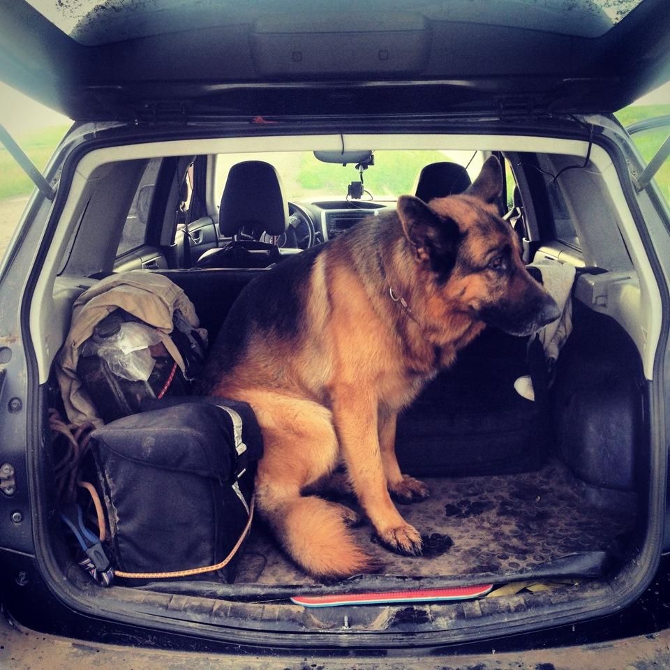 Сетка в багажник для перевозки собак