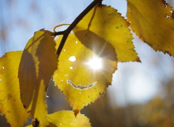 Солнечная осень картинки смешные, днем рите гифы