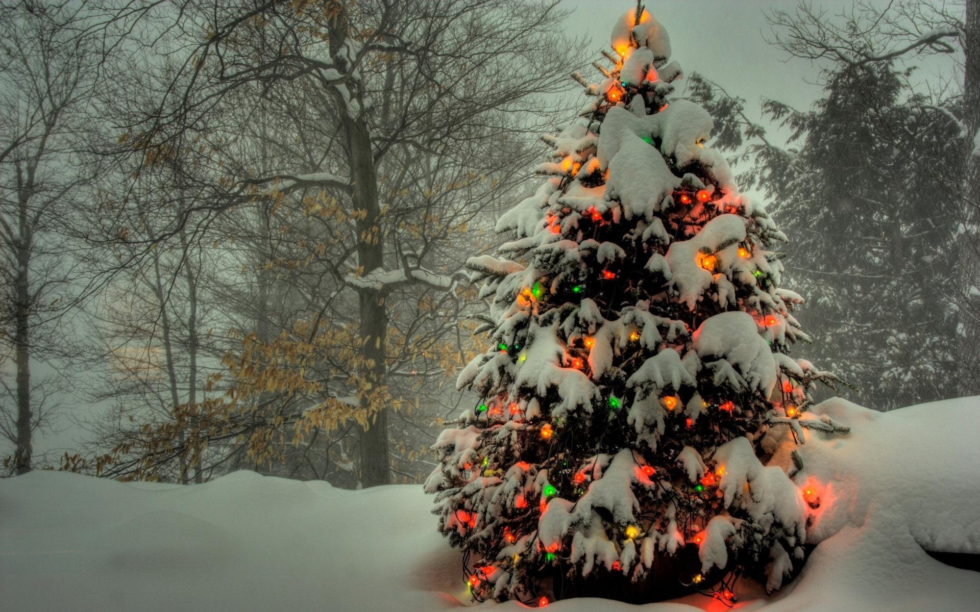 Картинки новогодних елок