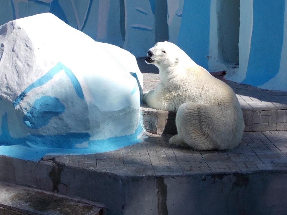 Прикольные, открытки новосибирский зоопарк