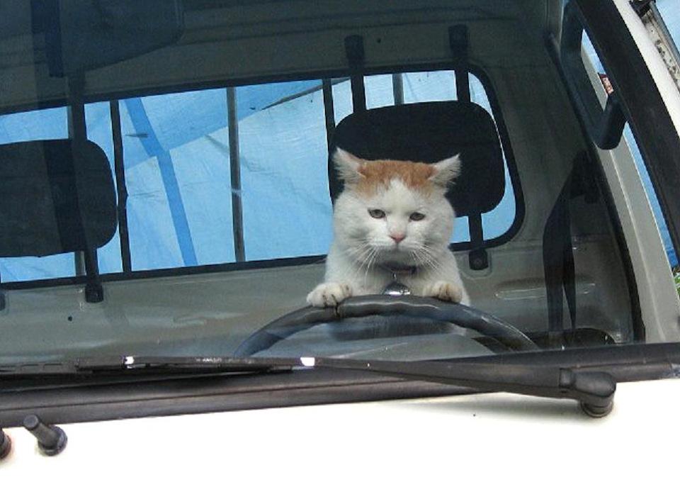 фото кошки ради которой хозяйка продала машину черепица много