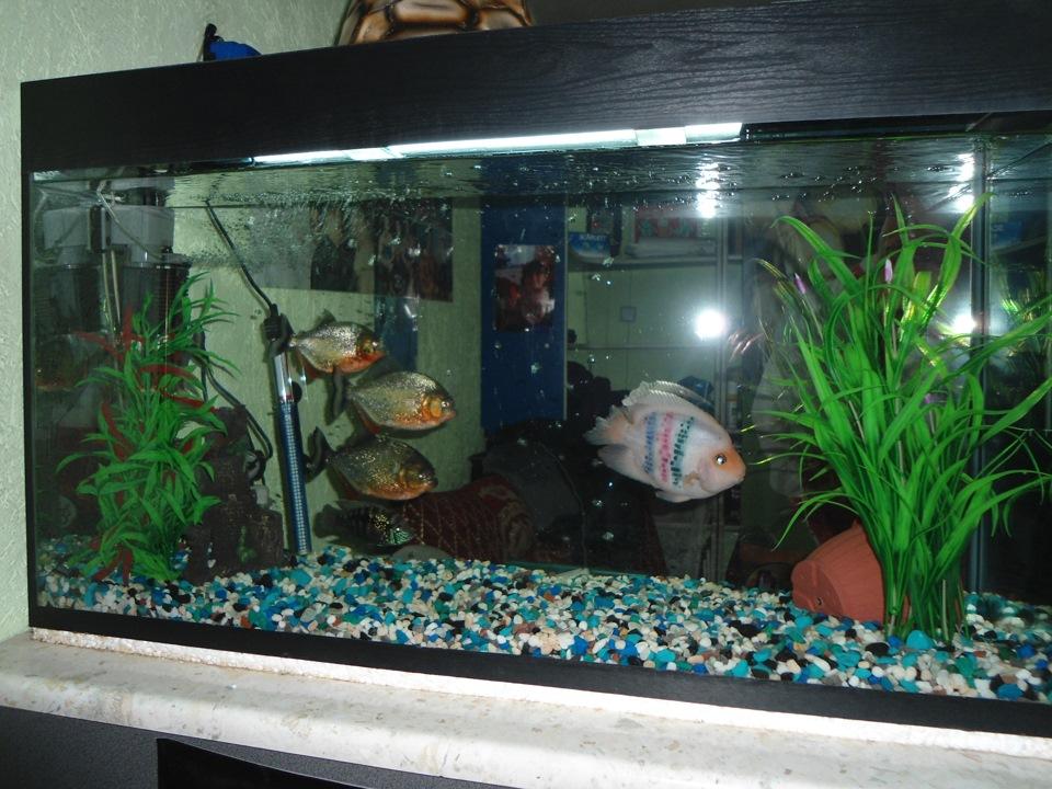 Рыбки для аквариум в домашних условиях 114