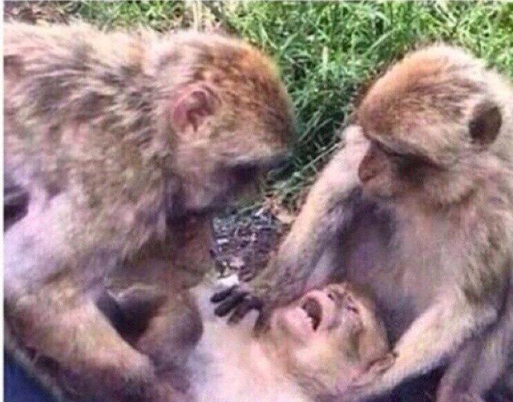 Оставьте меня в покое картинки с обезьянами