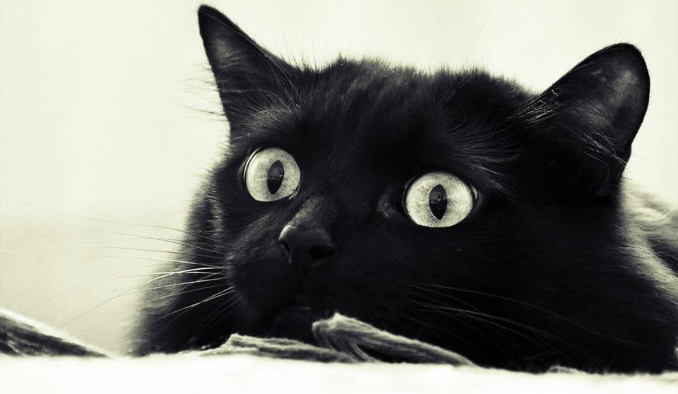 Черный улыбающийся кот