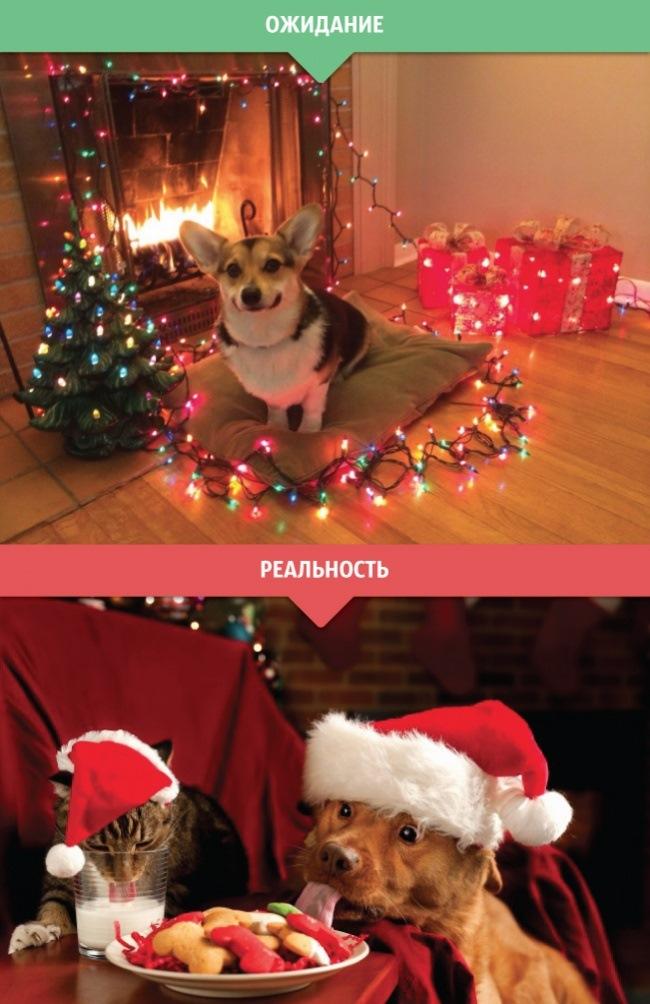 Прикольные картинки ожидание нового года