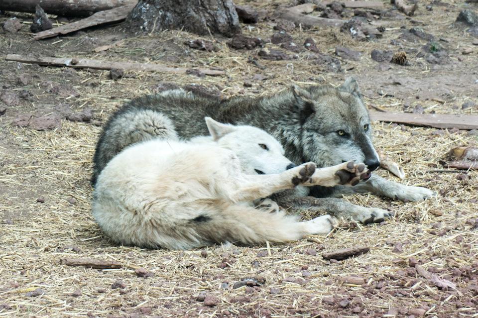 Гранд каньон зоопарк - 9