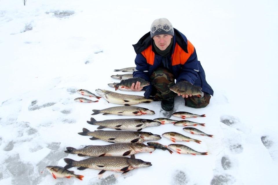 Ловля кумжи на кольском полуострове зимой