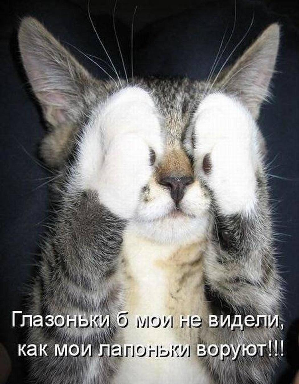 Картинки для, новые картинки с котами и надписями