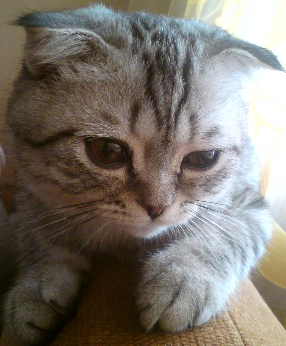 Когда кот перестанет линять