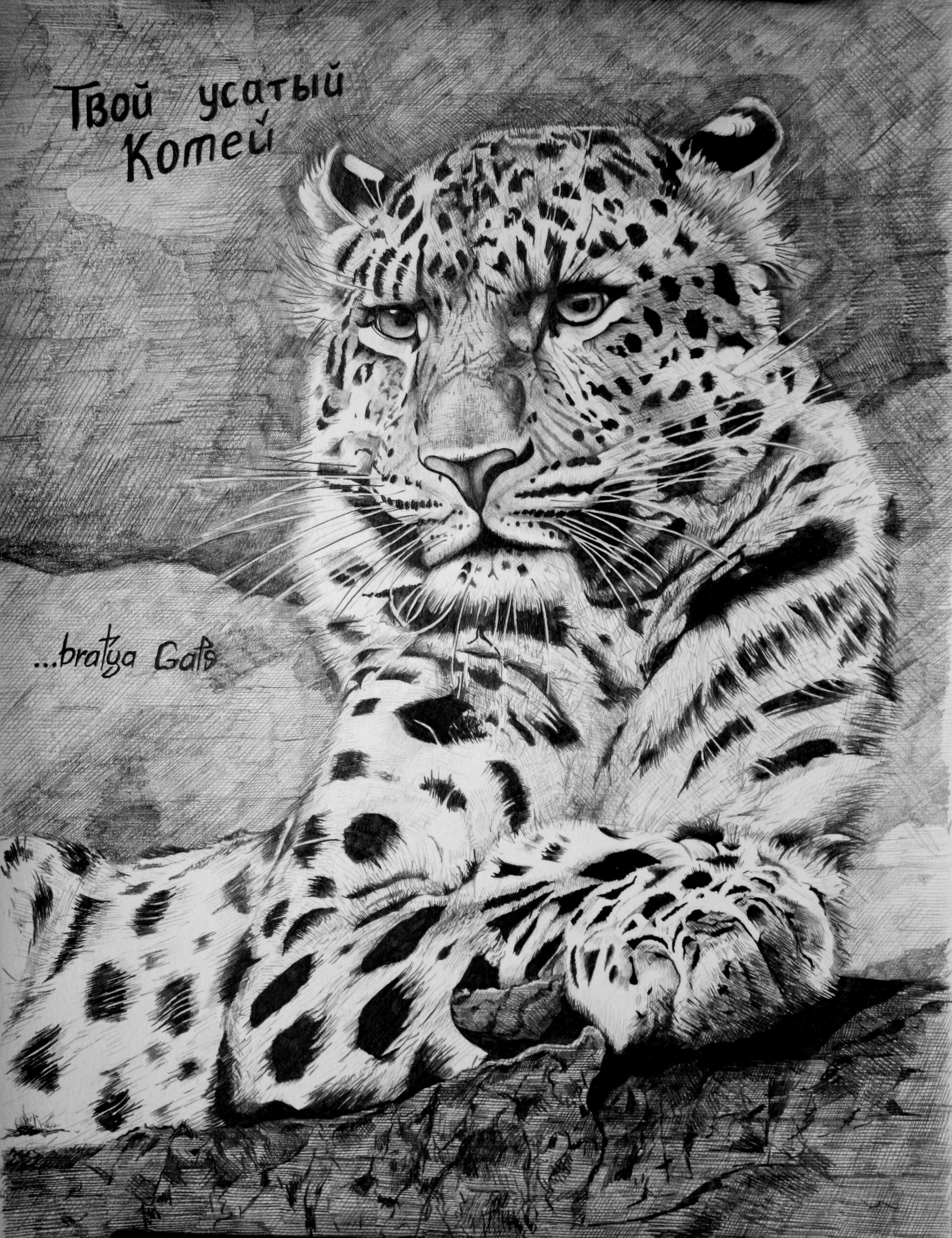 Рисунок Леопарда и Love is…