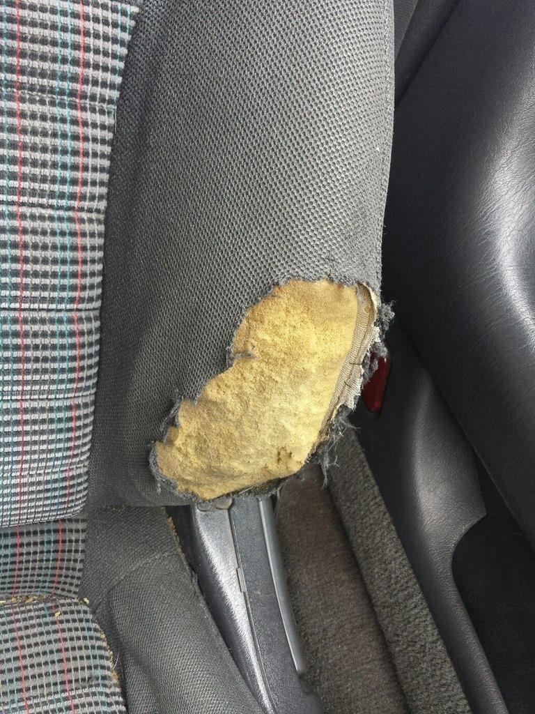 Мама сшила мне трусы из берёзовой коры что бы попа не потела не кусали