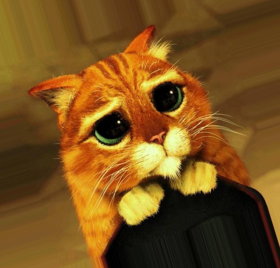 дешевых котята из шрека фото с глазами картинки жизнь твоя как