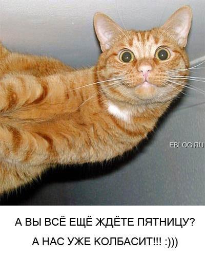 смотреть приколы про кошек: