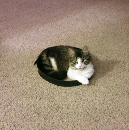 Коты в кругу сидят