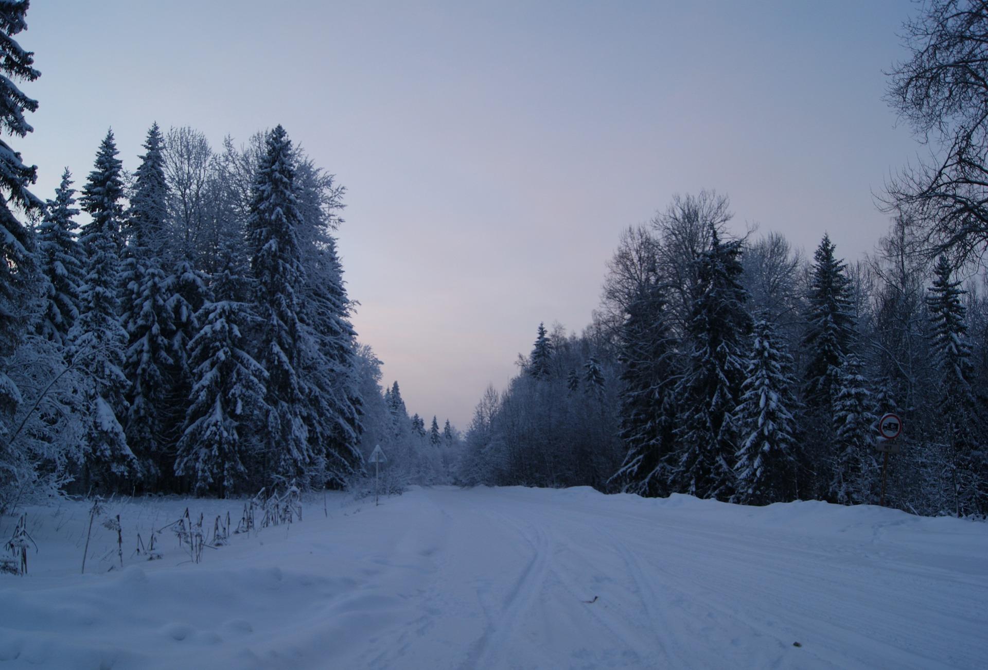 Зима тайга фото
