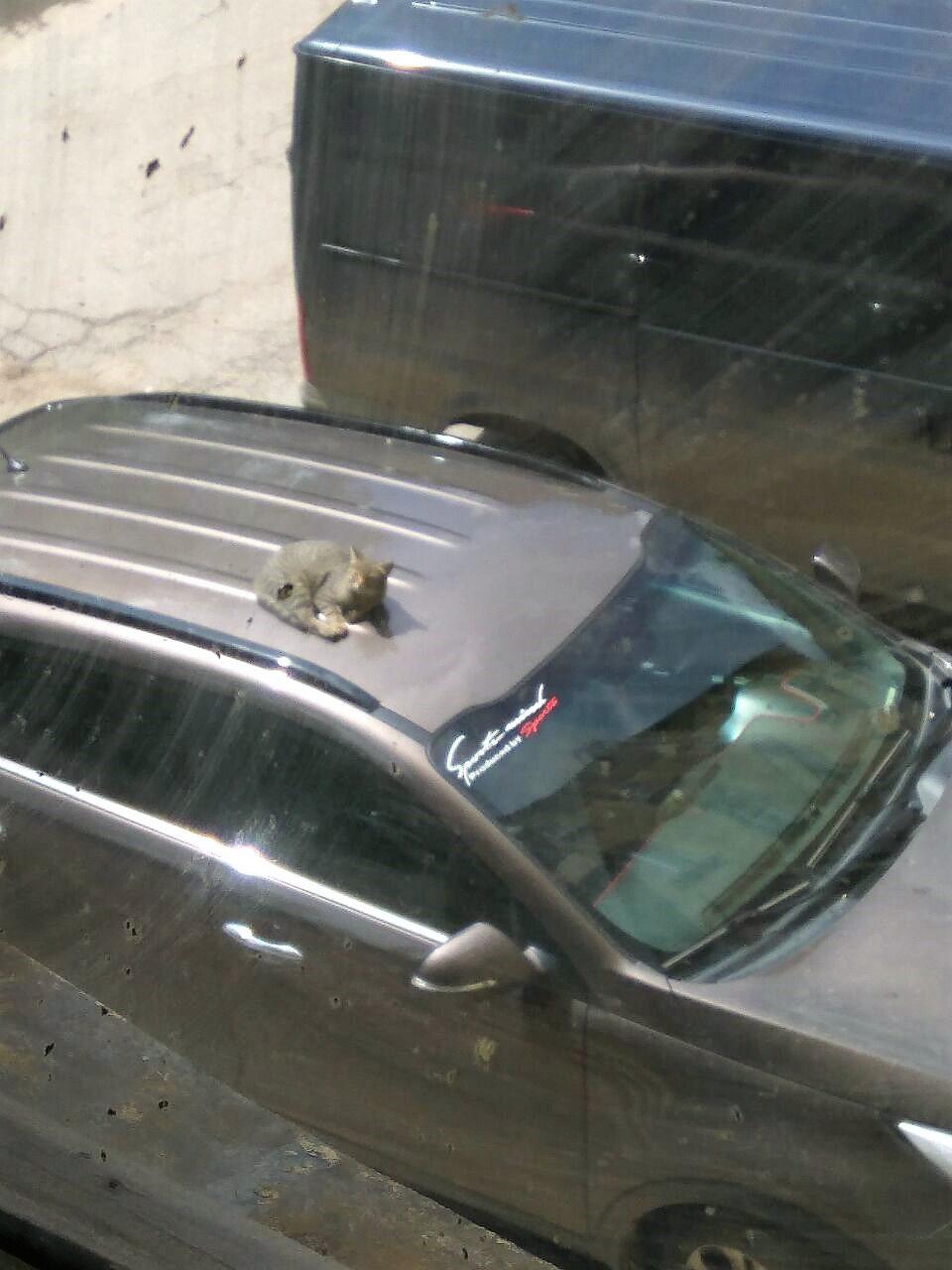 Отвадить котов машины