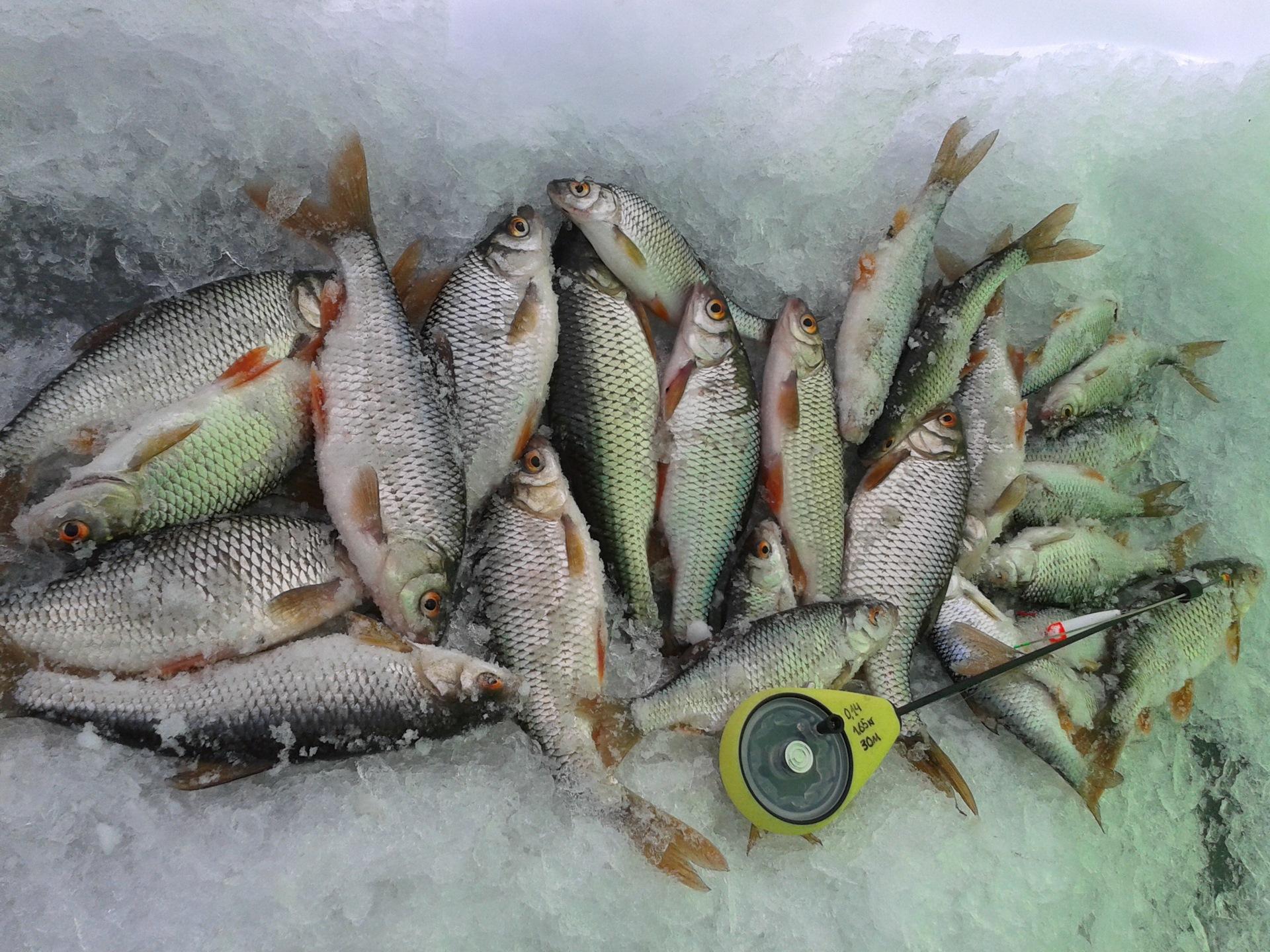 рыбалка на воронежском водохранилище картинки следует