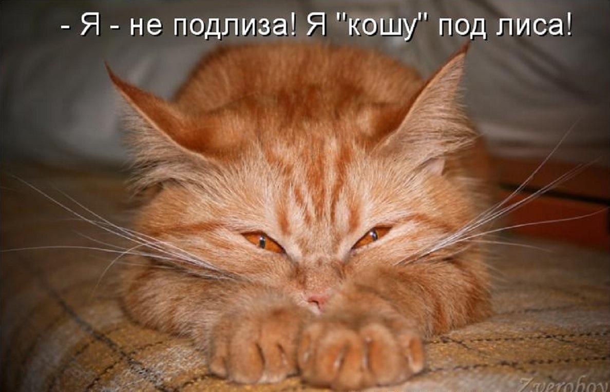Рыжий кот картинки прикольные с надписями, день