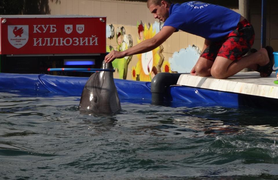 фото перевозка дельфинов и белух дороге школу