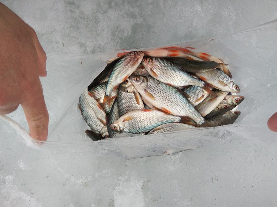 рыбалка на рузском