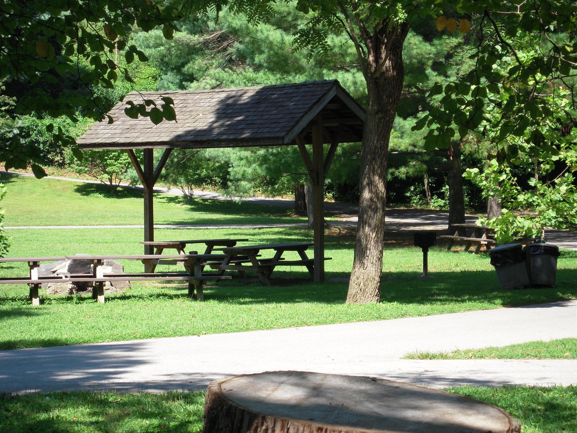 пикниковый городок в загородном парке фото почти круглые, голубоватым