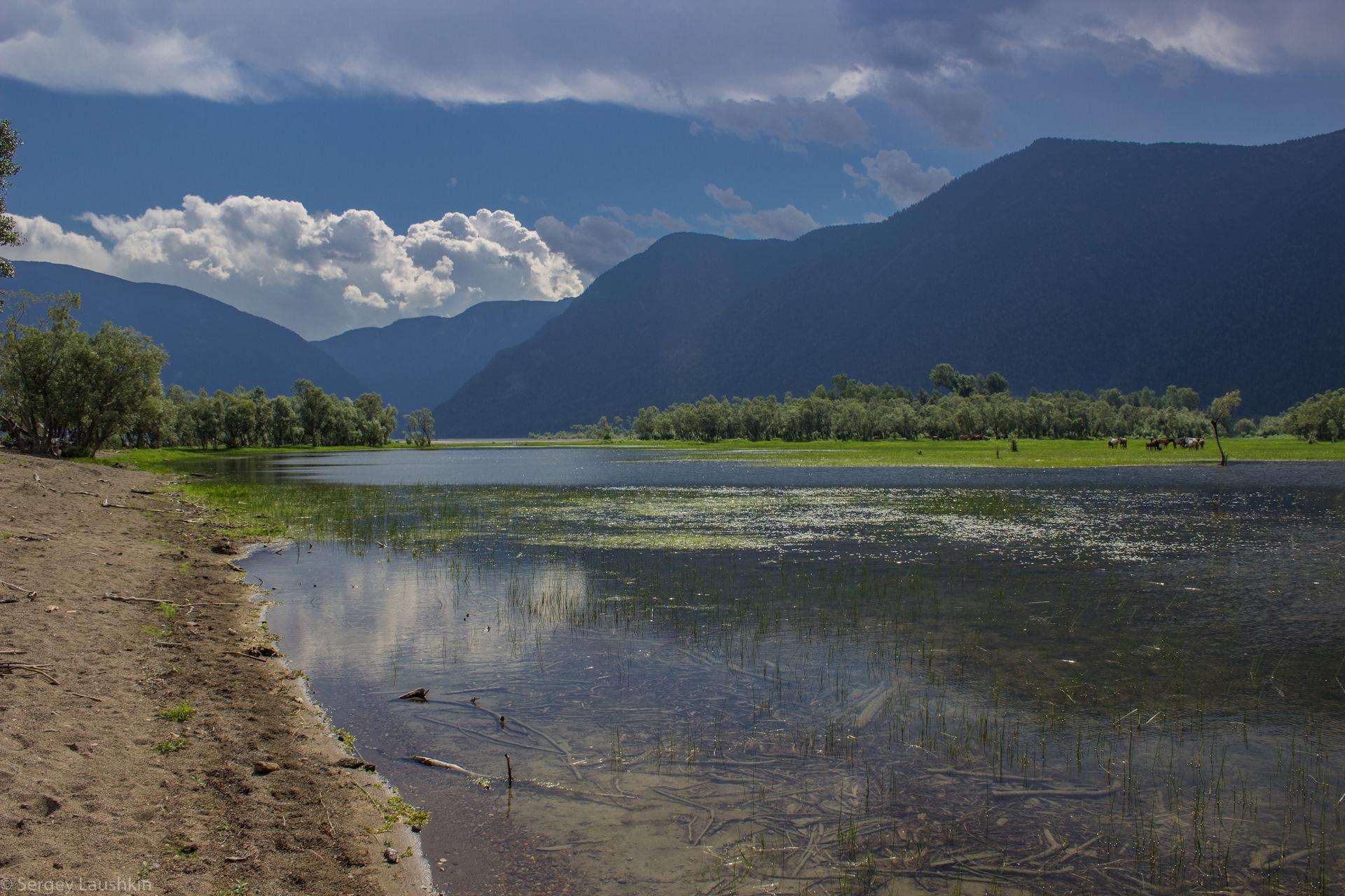 овец телецкое озеро южная сторона фото для химической завивки
