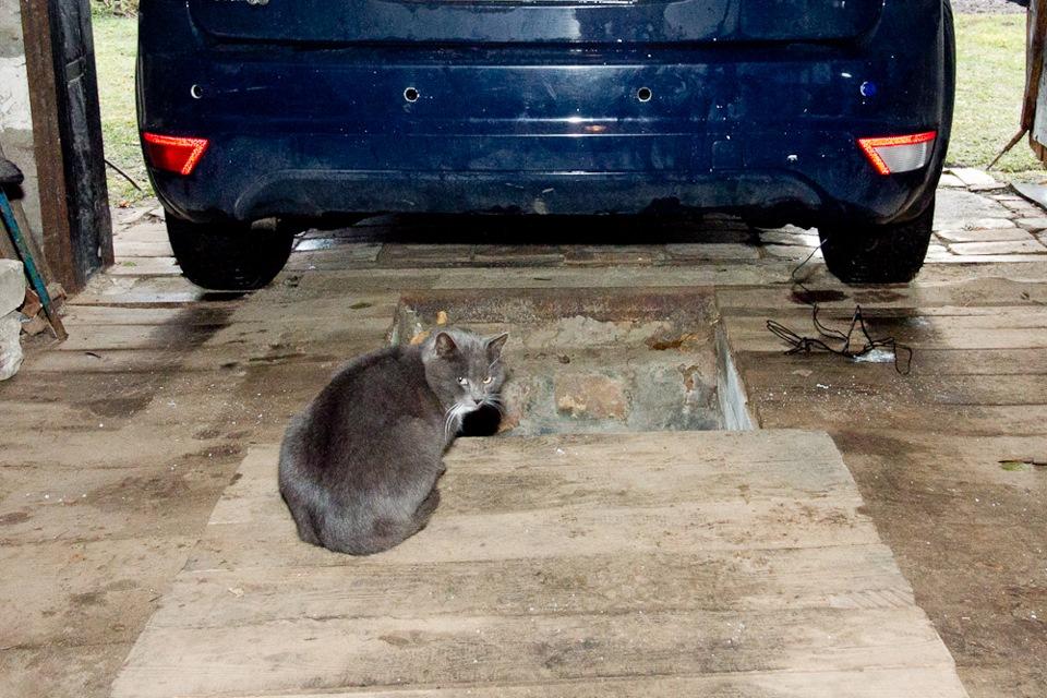"""Ford Focus Hatchback """"Овощ"""" › Бортжурнал › Установка парктроника в хэтчбэк Форд Фокус 2. Часть 1"""