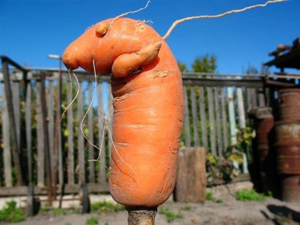 Картинки про морковь смешные