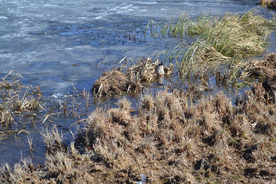 Утки в монастырском озере.
