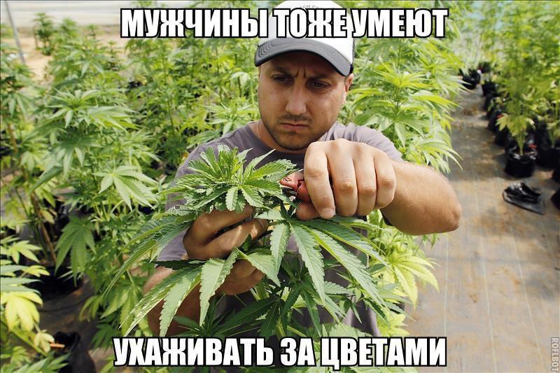Приколы про коноплю курить марихуану дома